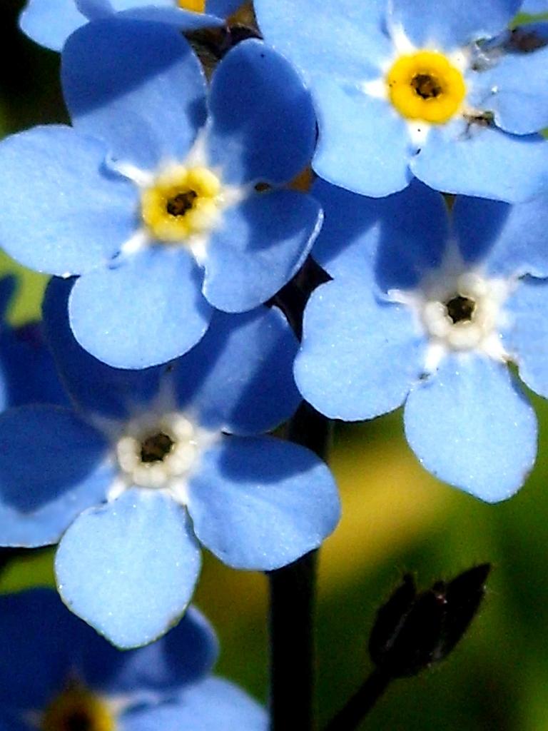 Fotos Botanik Wildblumen Sonstige